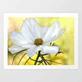 Floral White Cosmos Art Print
