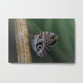 Giant Owl Butterfly On Screw Pine Metal Print