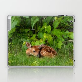 Baby Deer Laptop & iPad Skin