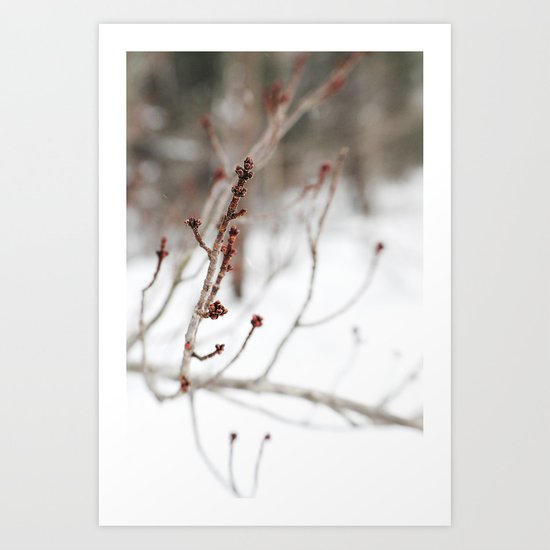 Winter Branch Art Print