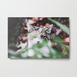 Kitten Hiding in the Grass Metal Print