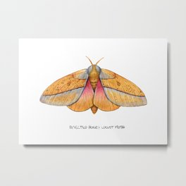 Bisected Honey Locust Moth (Sphingicampa bisecta) Metal Print