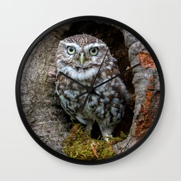 Owl in a tree hole Wall Clock