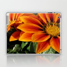 Gazania Laptop & iPad Skin