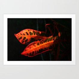 Dramatic Crotons DP161026a Art Print