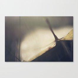 Wet Leaves Canvas Print