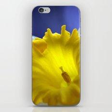Daffodil in blue 9854 iPhone & iPod Skin