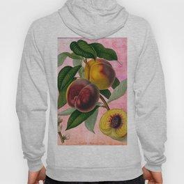 Vintage Botanical Collage, Bradford Peach Hoody