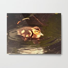 Baby chick paddles Metal Print