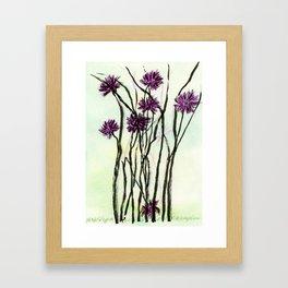 Invasive Knapweed Framed Art Print