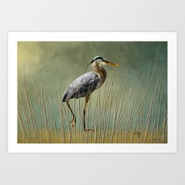 Great Blue At The Beach Art Print