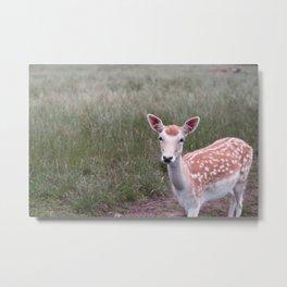 Sika Deer Metal Print