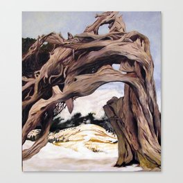 tangled tree Canvas Print
