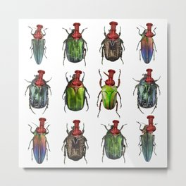 Beetles on the wall Metal Print