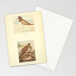 Killdeer Bobwhite10 Stationery Cards