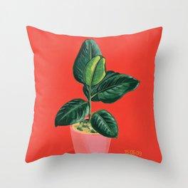Point & Shoot - Ficus Throw Pillow