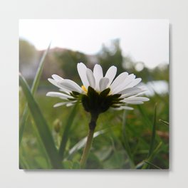 Dasiy Flower Metal Print