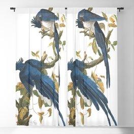Columbia jay, Birds of America, Audubon Plate 96 Blackout Curtain