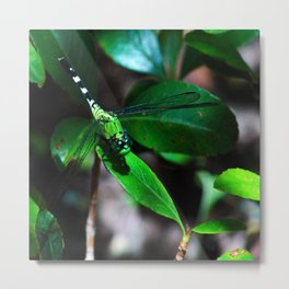 A Slightly Saturated Dragonfly Metal Print