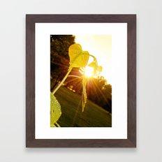 Redbud and Sunflare Framed Art Print