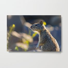 Pensive Squirrel Metal Print