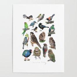 Native NZ Birds Poster