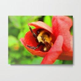 bee comfortable Metal Print