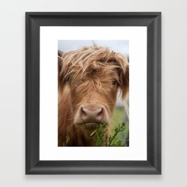 Highlander Cow Framed Art Print