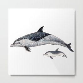 Pantropical spotted dolphin Metal Print