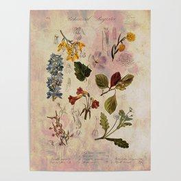 Botanical Study #1, Vintage Botanical Illustration Collage Poster