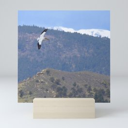 Watercolor Bird American White Pelican 10, Longmont, CO Mini Art Print