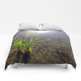Water Reeds Comforters