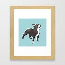 Boston Terrier 2 Framed Art Print
