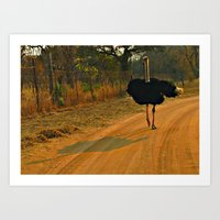 ostrich Art Prints featuring Ostrich by Ramsay