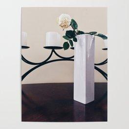 Bloomed rose Poster