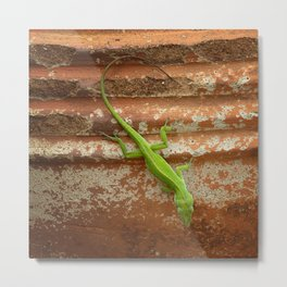 Lizard on Flowerpot Metal Print