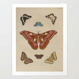 BUTTERFLIES ATLAS Moth LEPIDOPTERA - Pieter Cramer Hanging Wall Art Decor Natural History Print Art Print