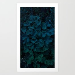 Columbine Leaves Art Print