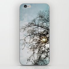 Blue Sky and Tree iPhone & iPod Skin
