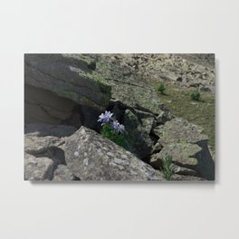 Columbines on a Rock Slide Metal Print