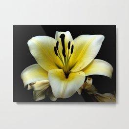 Wonderful Flower yellow and black Metal Print