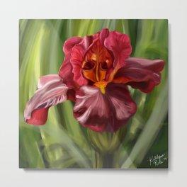 Stunning Red Iris Flower, Nature Print, Hand drawn original artwork Metal Print
