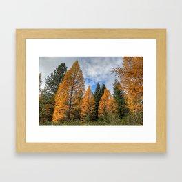 Autumn on the Mountain Framed Art Print