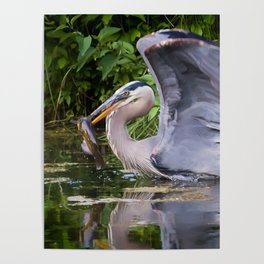 Heron and bullhead take-off Poster