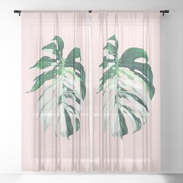 Monstera Albo Borsigiana in Pink Sheer Curtain