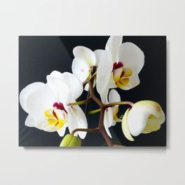 White Orchid WC 2 Metal Print