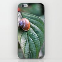 snail iPhone & iPod Skins featuring snail by  Agostino Lo Coco