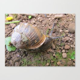 mr snail Canvas Print