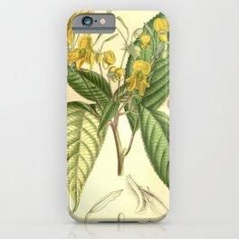 Flower 7786 impatiens chrysantha iPhone Case