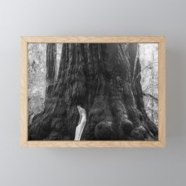 Peace in Nature Redwood Forest Framed Mini Art Print